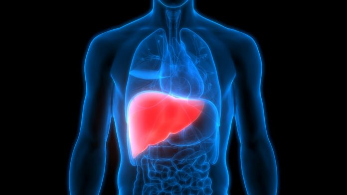 Study discovers new weapon in battle against liver illnesses